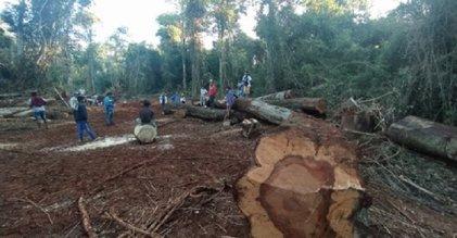 Denuncian que no cesa el desmonte en los territorios de comunidades guaraníes