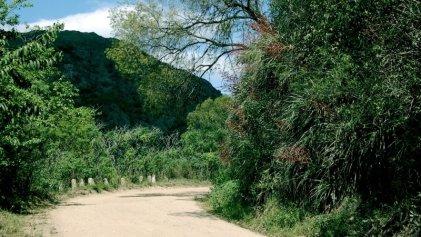 Córdoba: una resolución habilita la destrucción del monte nativo en caminos y rutas