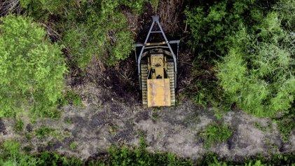 Ordenan frenar la actividad forestal en Chaco en defensa del bosque nativo