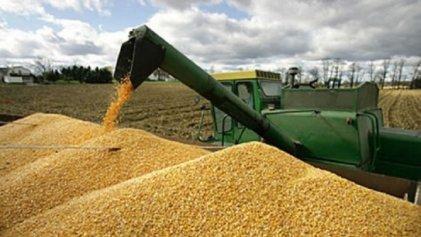 """Ganancias del agropower: """"El maíz tiene retenciones históricamente bajas"""""""
