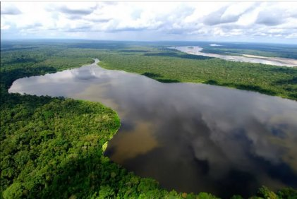 Deforestación: Bolsonaro lucha contra los hechos y pone en riesgo la Amazonia