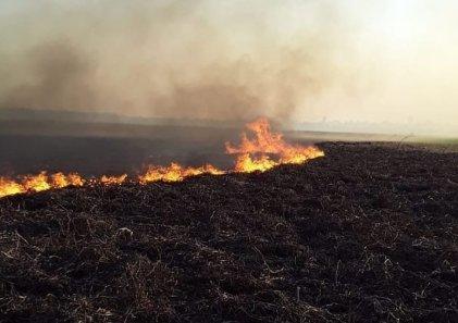 Fuego en las islas del Paraná: el relato de los voluntarios que ponen el cuerpo para combatirlo